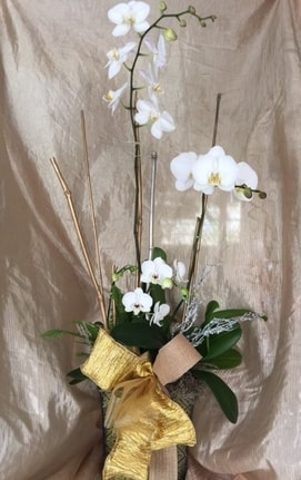 White roses bouquet for decoration